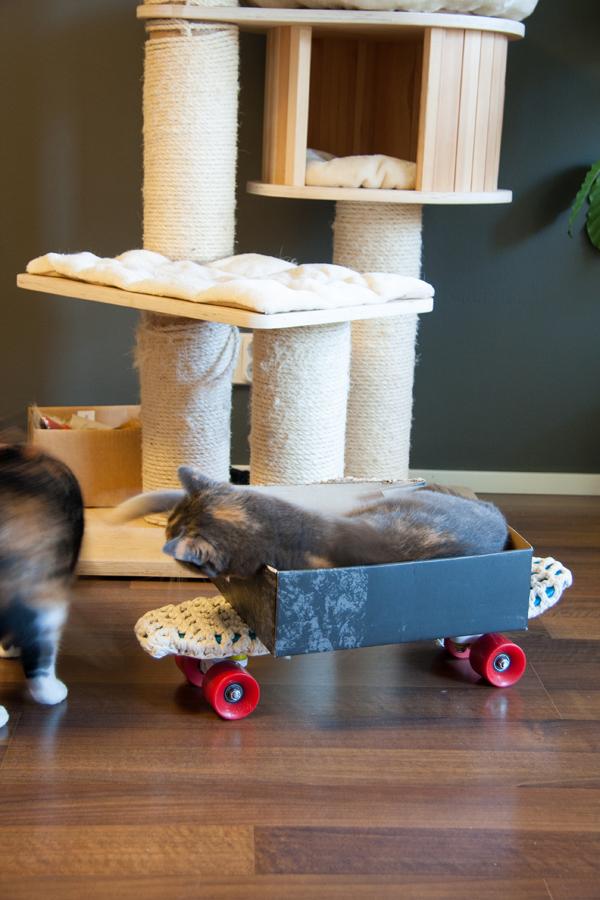 Däni-kissa huitoo Armi-kissaa