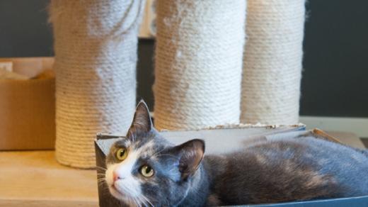 Kissa skeittilaudan päällä